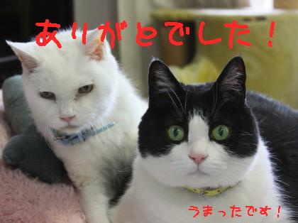 IMG_9660_a.jpg